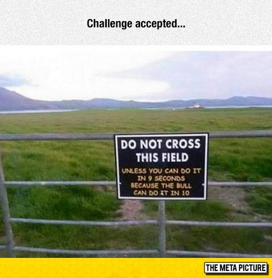 funny-field-bull-sign