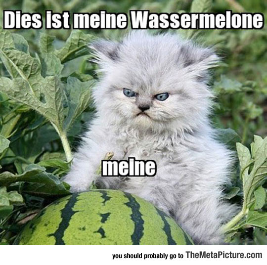 cool-angry-kitten-cute-watermelon