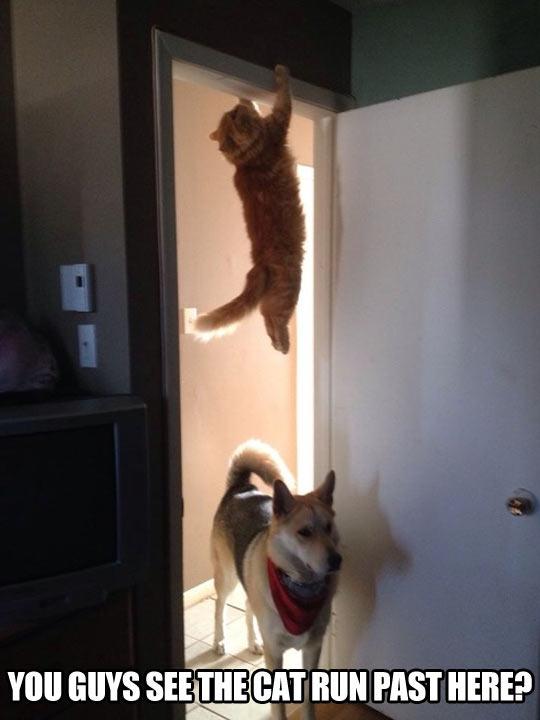 cool-cat-hanging-door-dog