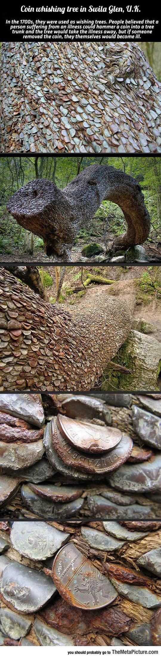 cool-coin-whishing-tree-UK-woods