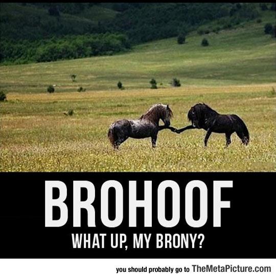 Sup Brony...