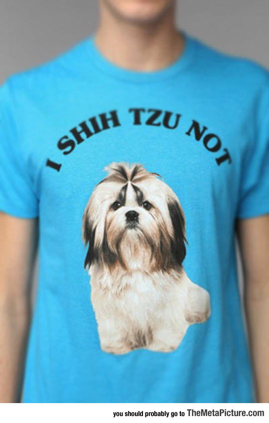 cool-shirt-shih-tzu-dog