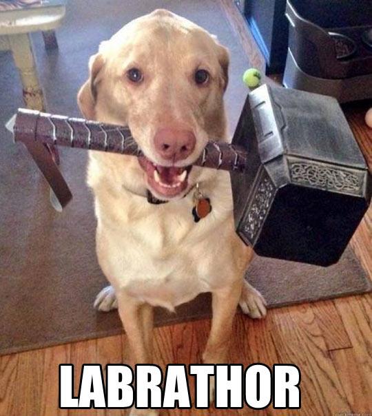 cool-dog-Thor-hammer-Labrador