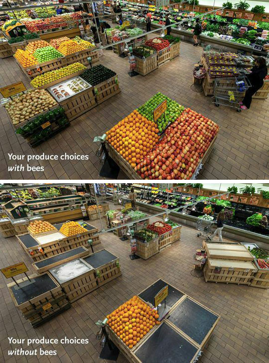 bee-super-market-products
