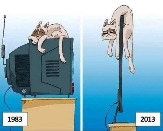Cats Dislike Technological Advances