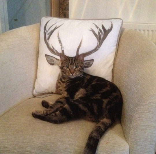 funny-cat-antlers-couch