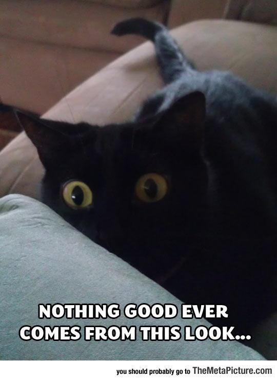 cool-cat-shocked-scared-black