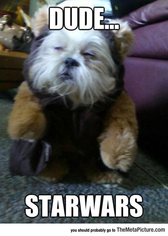 cool-dog-Ewok-look-alike-Star-Wars