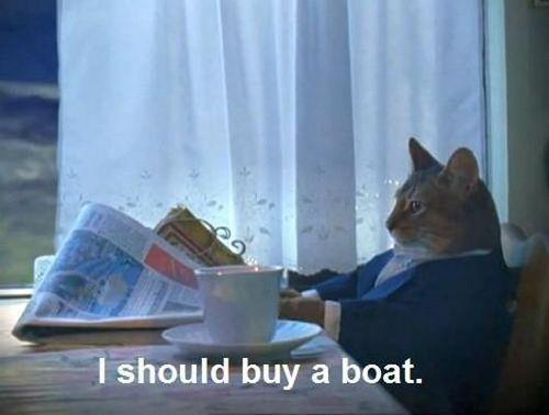 This cat followed his dreams...
