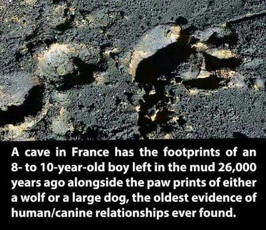 cool-prehistoric-evidence-paw-footprints