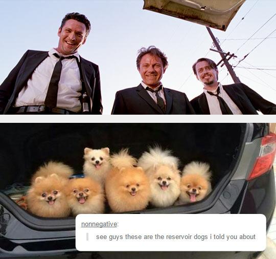 funny-Reservoir-Dog-puppy-trunk