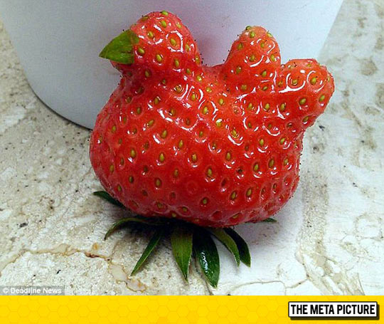 Chicken-Shaped Strawberry