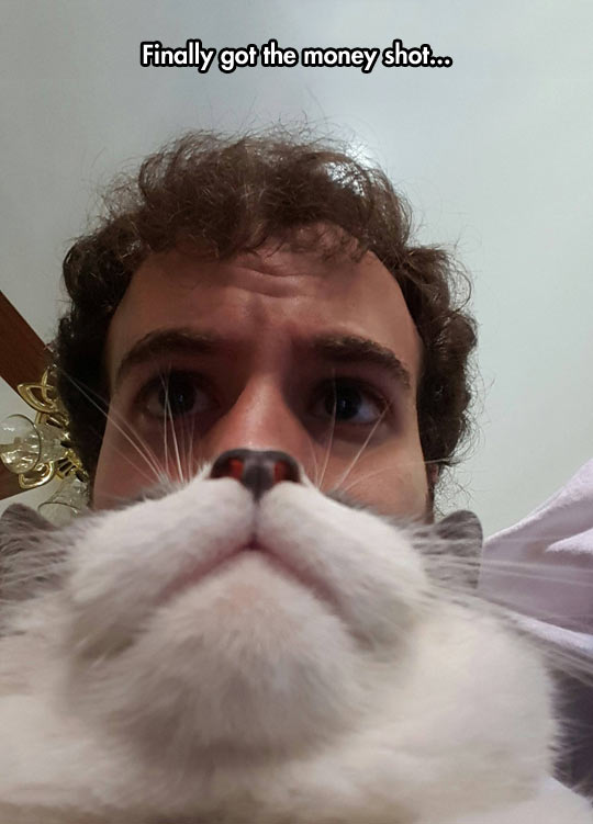 funny-man-cat-beard-face