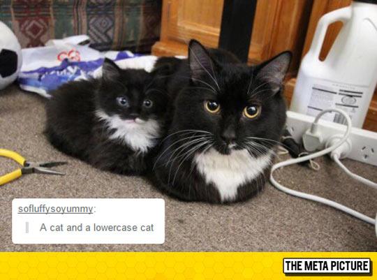 funny-cat-mini-me-kitten