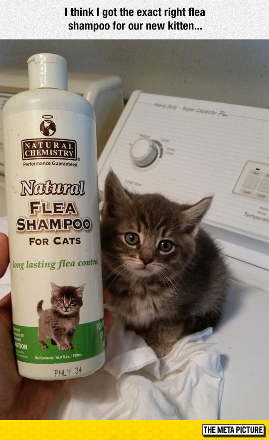 funny-cat-product-label