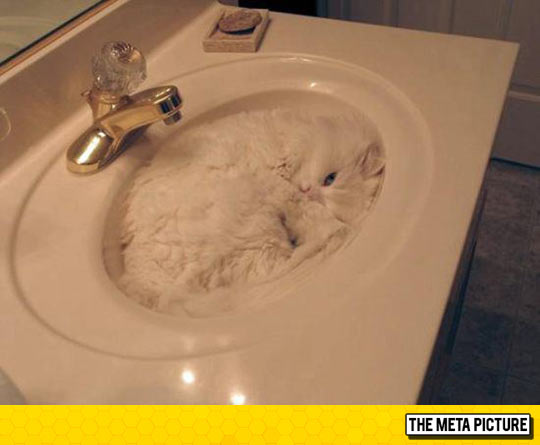 funny-cat-sleeping-sink-camouflage