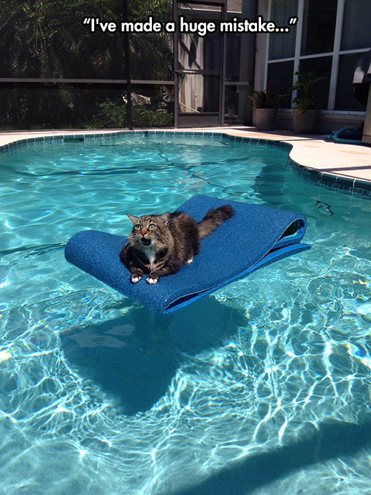 funny-cat-pool-mat-scared