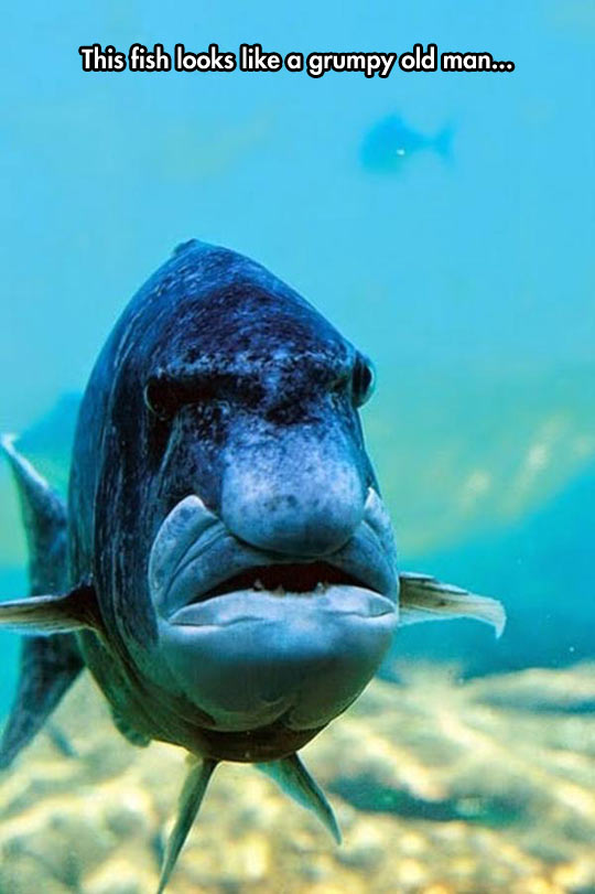 funny-fish-looks-like-old-man