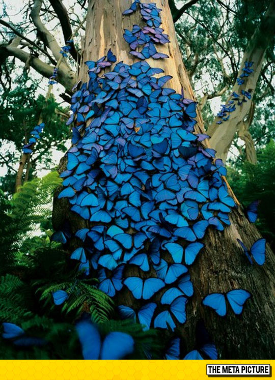 cool-butterflies-blue-tree-nature-epic