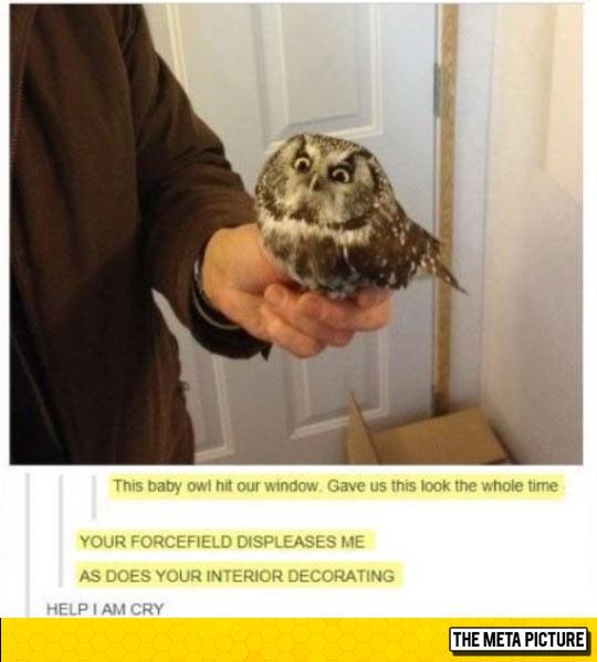 Owl Isn