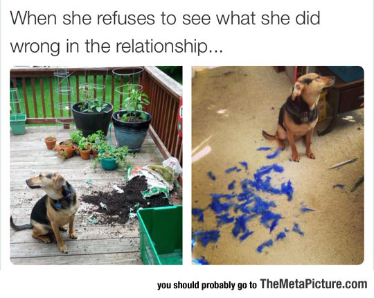 funny-dog-guilty-broken-things