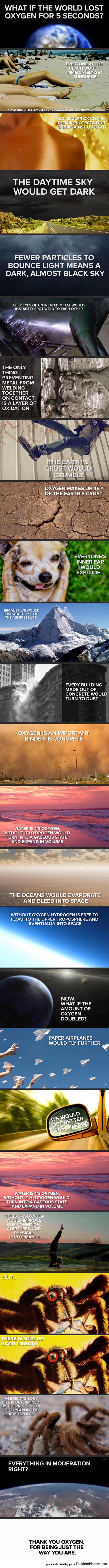 funny-oxygen-world-spider