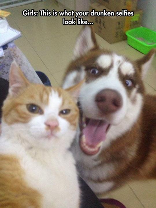 cool-dog-cat-selfie-friends