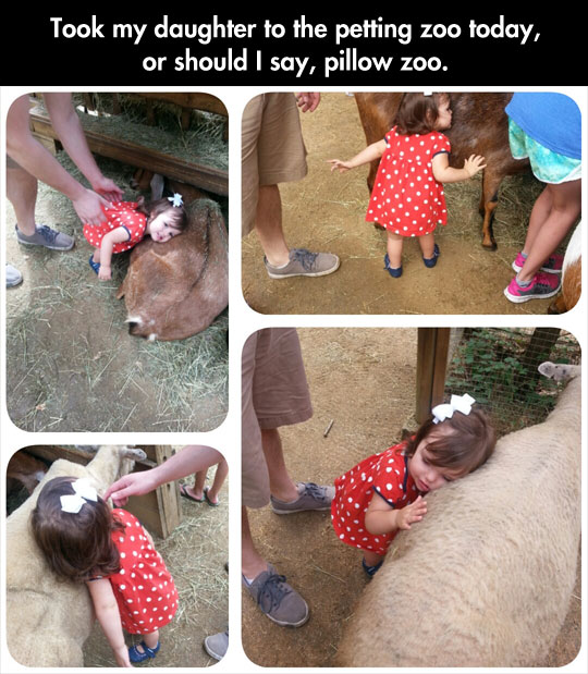 cool-little-girl-pillow-zoo-petting