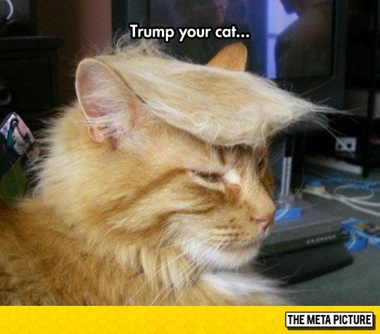 funny-Donald-Trump-cat-hair