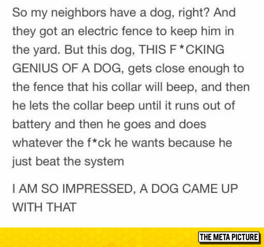 funny-electric-fence-dog-collar
