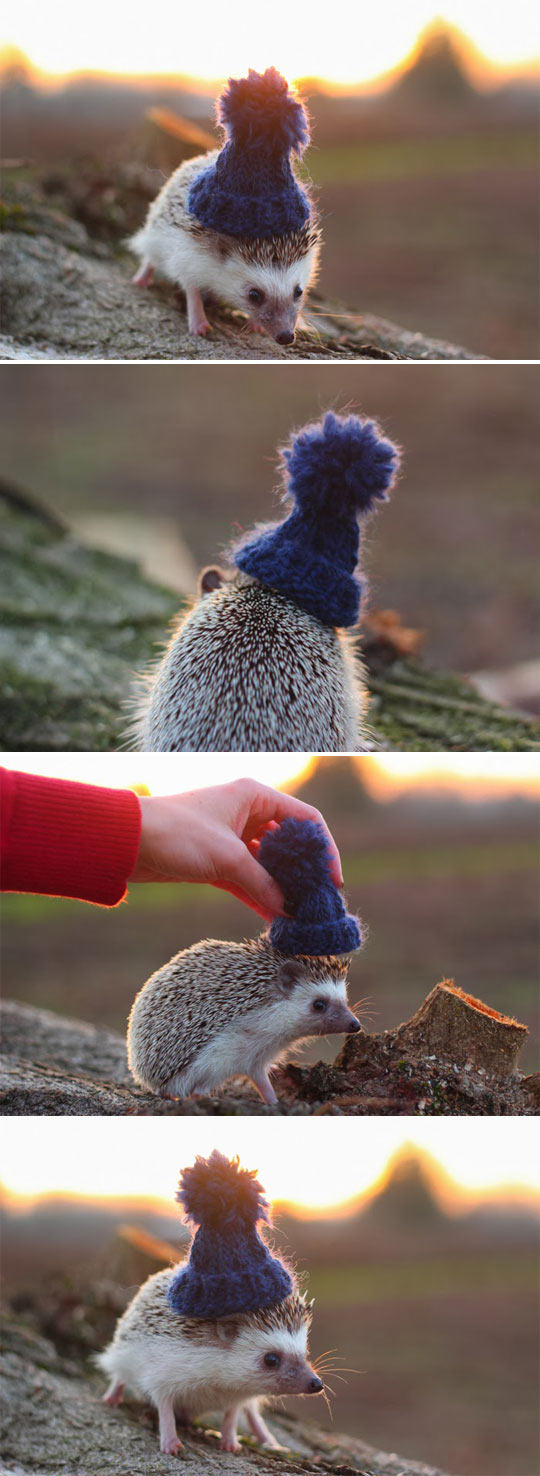 Stylish Hedgehog