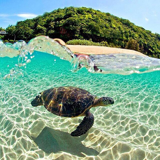 cool-transparent-water-turtle