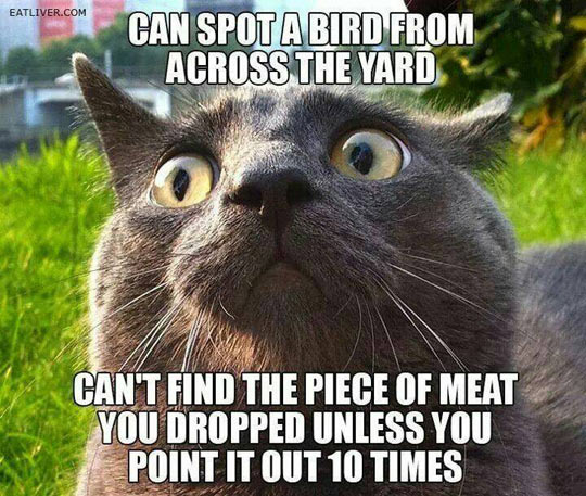 funny-cat-eyes-grey-hair