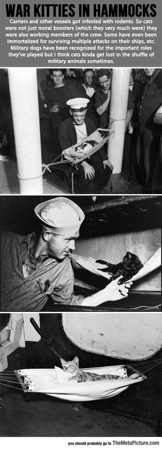 War Kitties In Little Hammocks