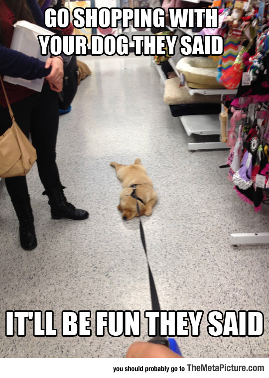Shopping With Your Dog