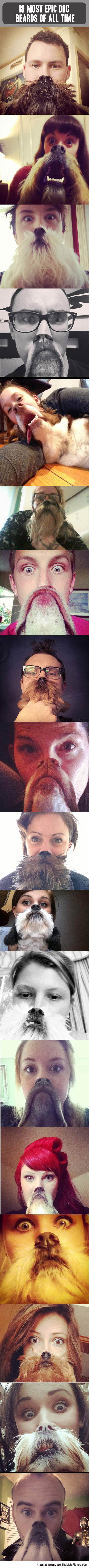 Epic Dog Beards