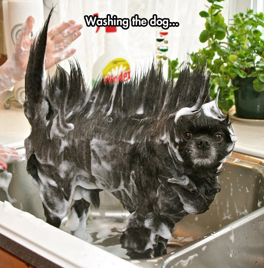 funny-dog-washing-hair-soup-sink