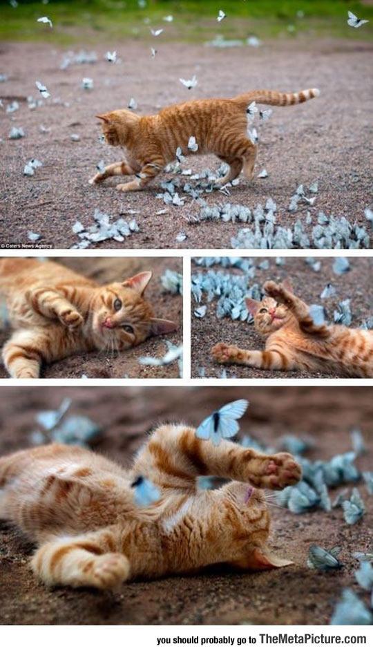 Just Basking In Butterflies