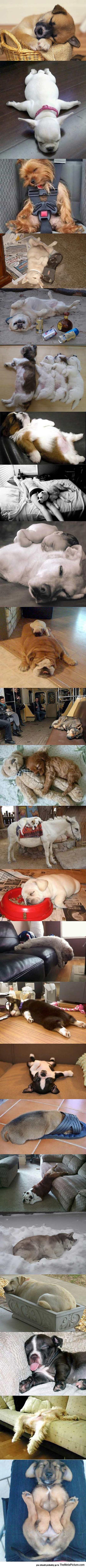 cool-dogs-asleep-floor-puppies-cute