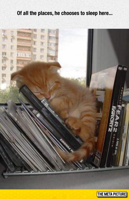 cute-cat-sleeping-books