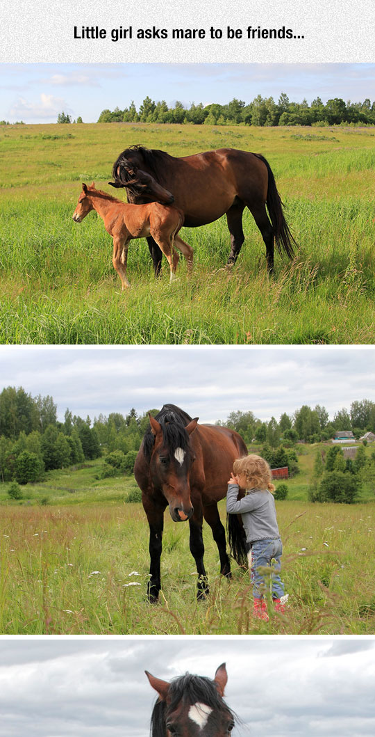 cute-horse-friends-litle-girl-happy
