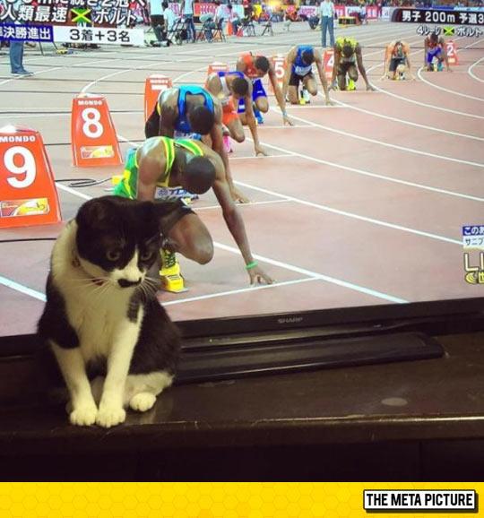 funny-cat-TV-runners