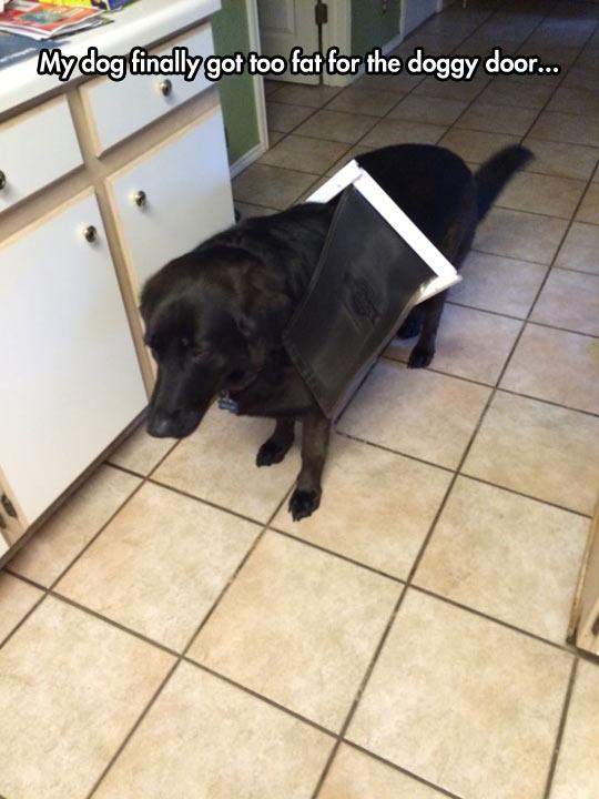 funny-dog-door-fat-home