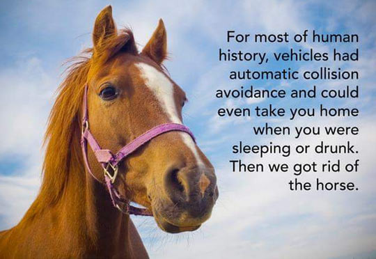cool-horse-vehicle-automatic-drunk