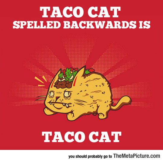 cool-taco-cat-toppings-clipart