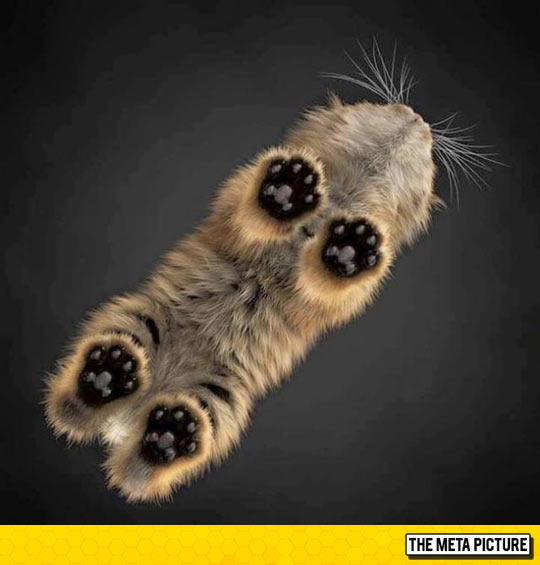 cute-cats-toes-paws-glass