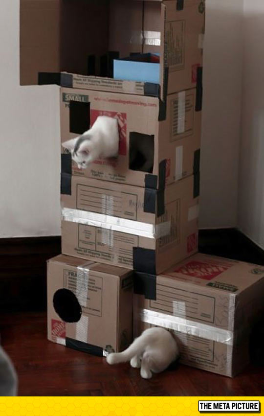funny-cat-playing-cardboard-boxes-Portal