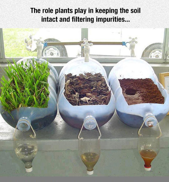 cool-soil-filter-dirt-plant