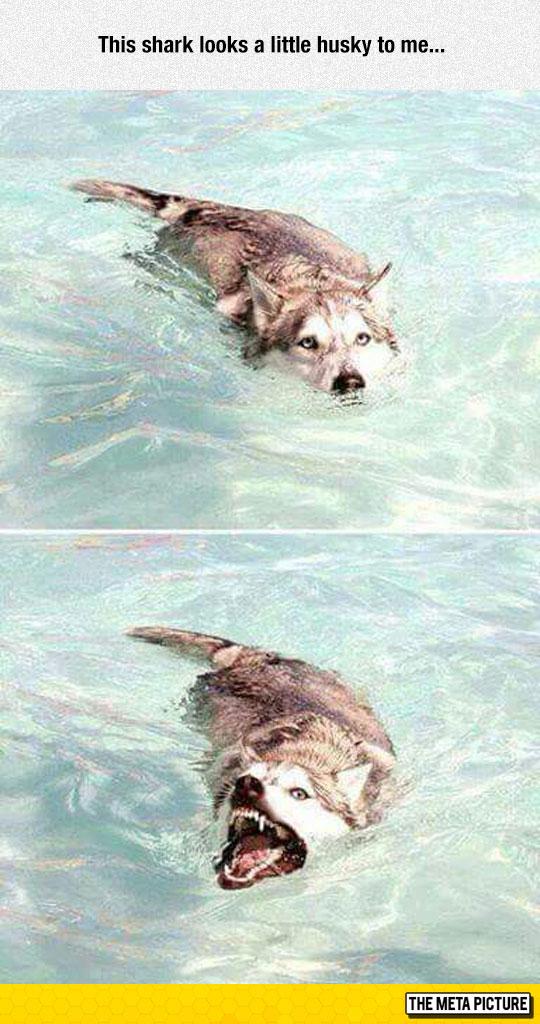 cool-dog-water-shark-teeth-scary