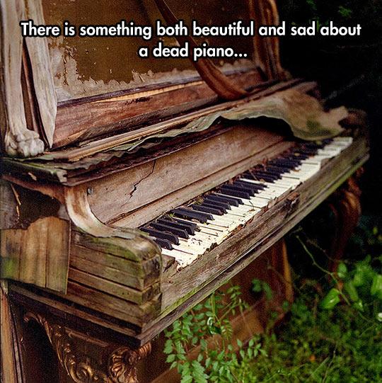 cool-piano-rotten-wood-broken-plants